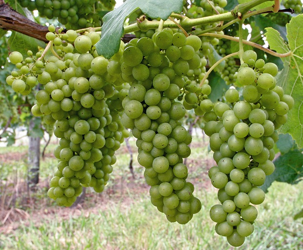 Źródło zdjęcia: www.noblegreenblog.com
