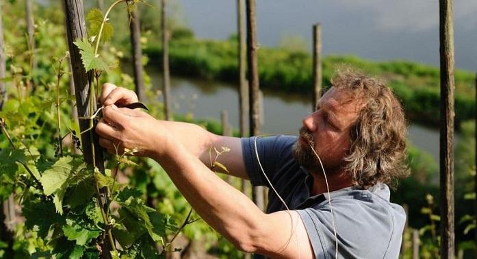 Clemens Busch Winemaker